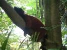 Zoo_3